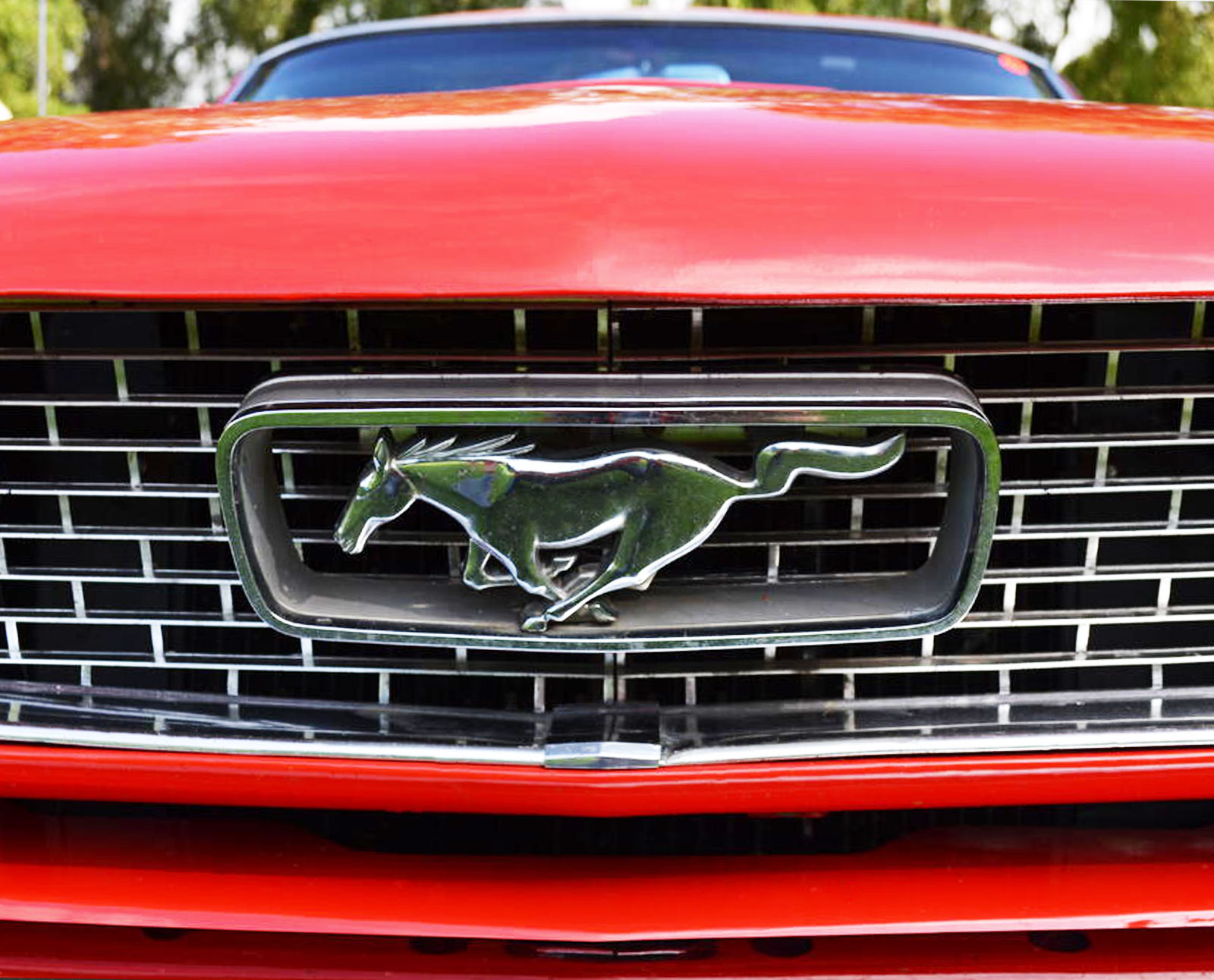 mustang front grill